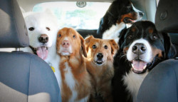 Top 10 cars for dog owners In 2021